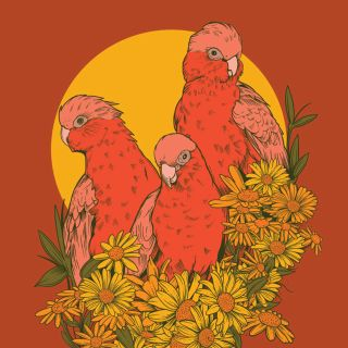 Digital art of Galahs by Mel Baxter