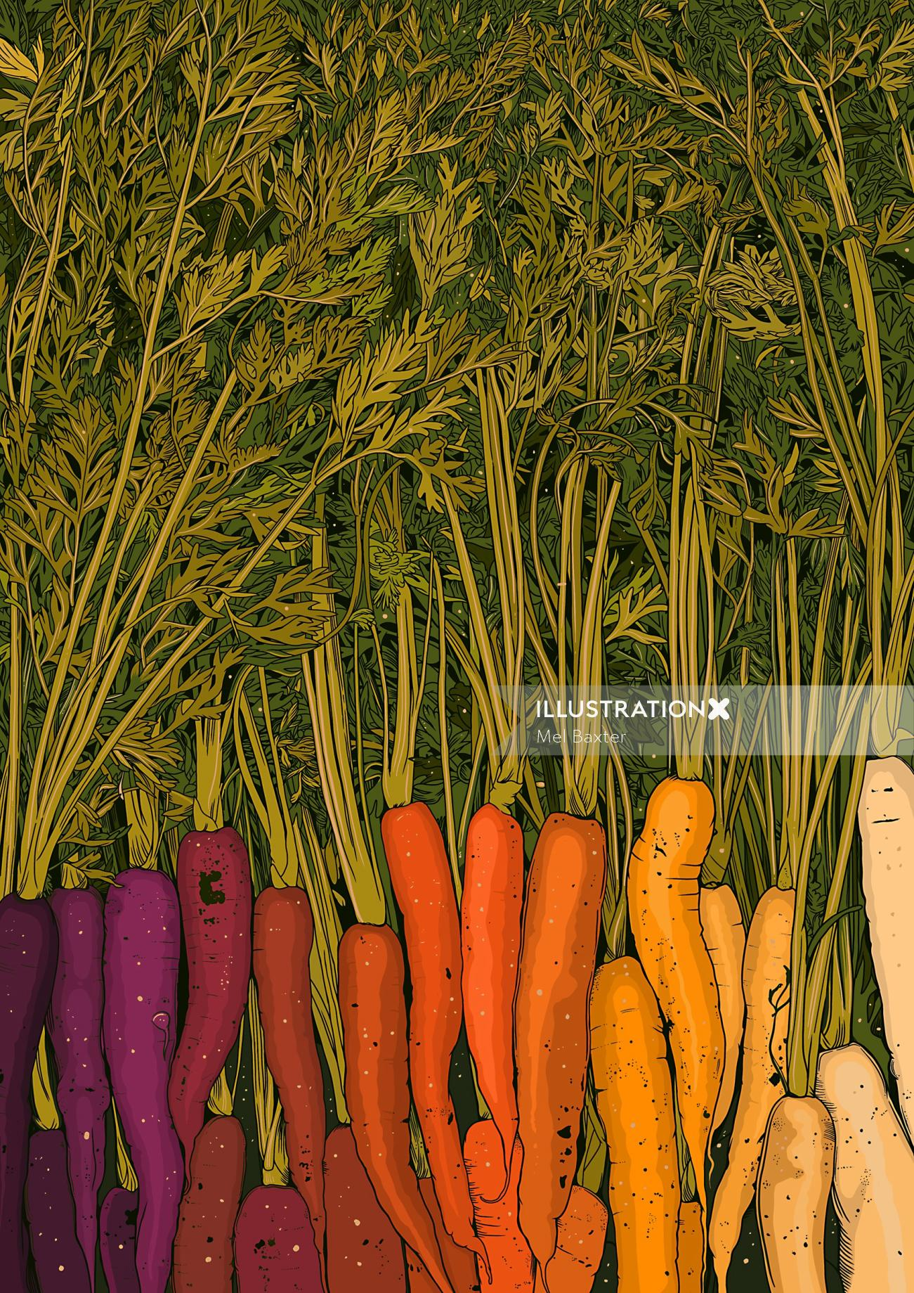 Digital illustration of Rainbow Carrots