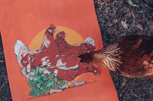 Pintura de gallo
