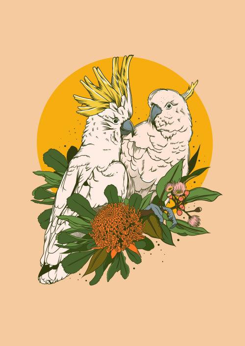 Animales pájaros blancos