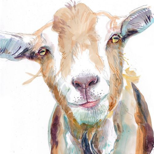 Watercolour illustration of goat