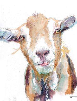 Watercolour illustration of goat
