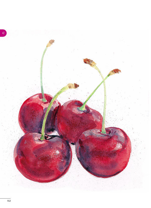 Watercolour painting of cherries