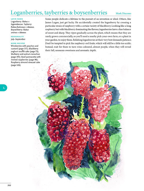Editorial art of strawberry fruits