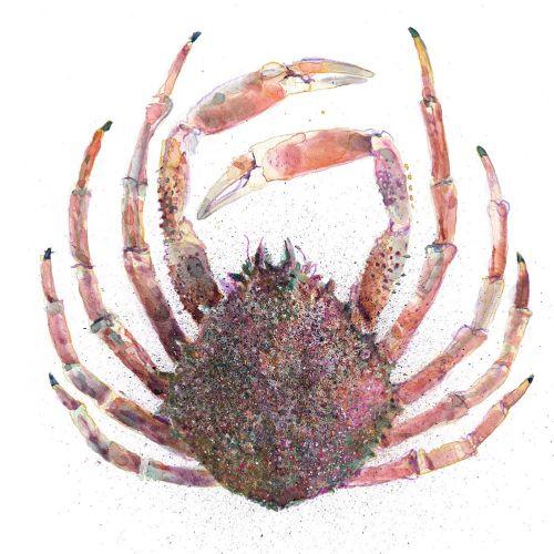 Graphic design of Chesapeake blue crab