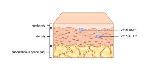 Skin skin anatomy illustration | Medical illustration collection