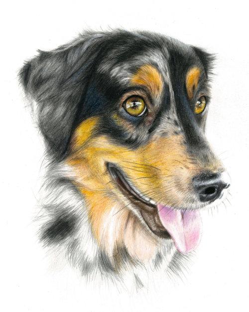 Pet Dog Portrait By Nicole Evans Illustrator