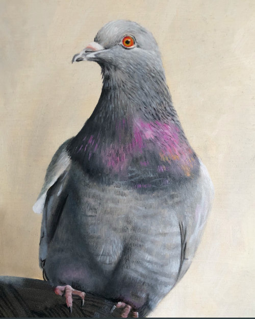 Oil painting of a pigeon