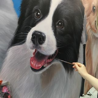 Border Collie installation shot