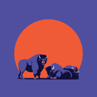 bison, american, animals, sunset, vector, wildlife