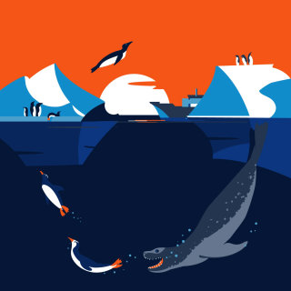 sea leopard, penguin, Antarctica, ice, birds, wildlife, vector, animals, underwater, iceberg