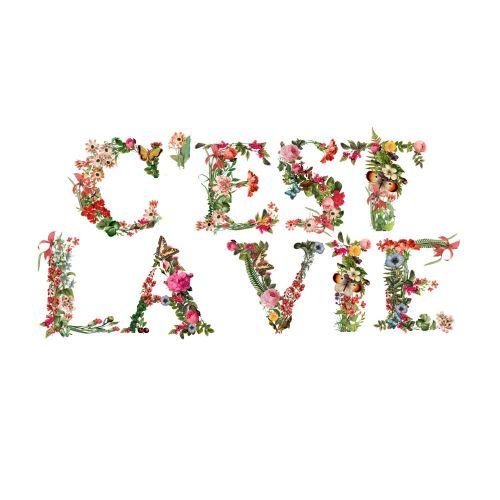 Beautiful Lettering art of C'est la vie