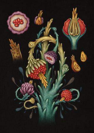 Alien flowers illustration