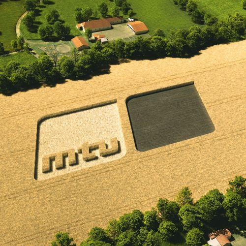 Photorealistic illustration of corn field