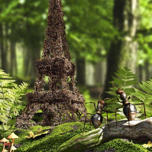 3d / CGI ant house