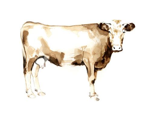 动物图形牛