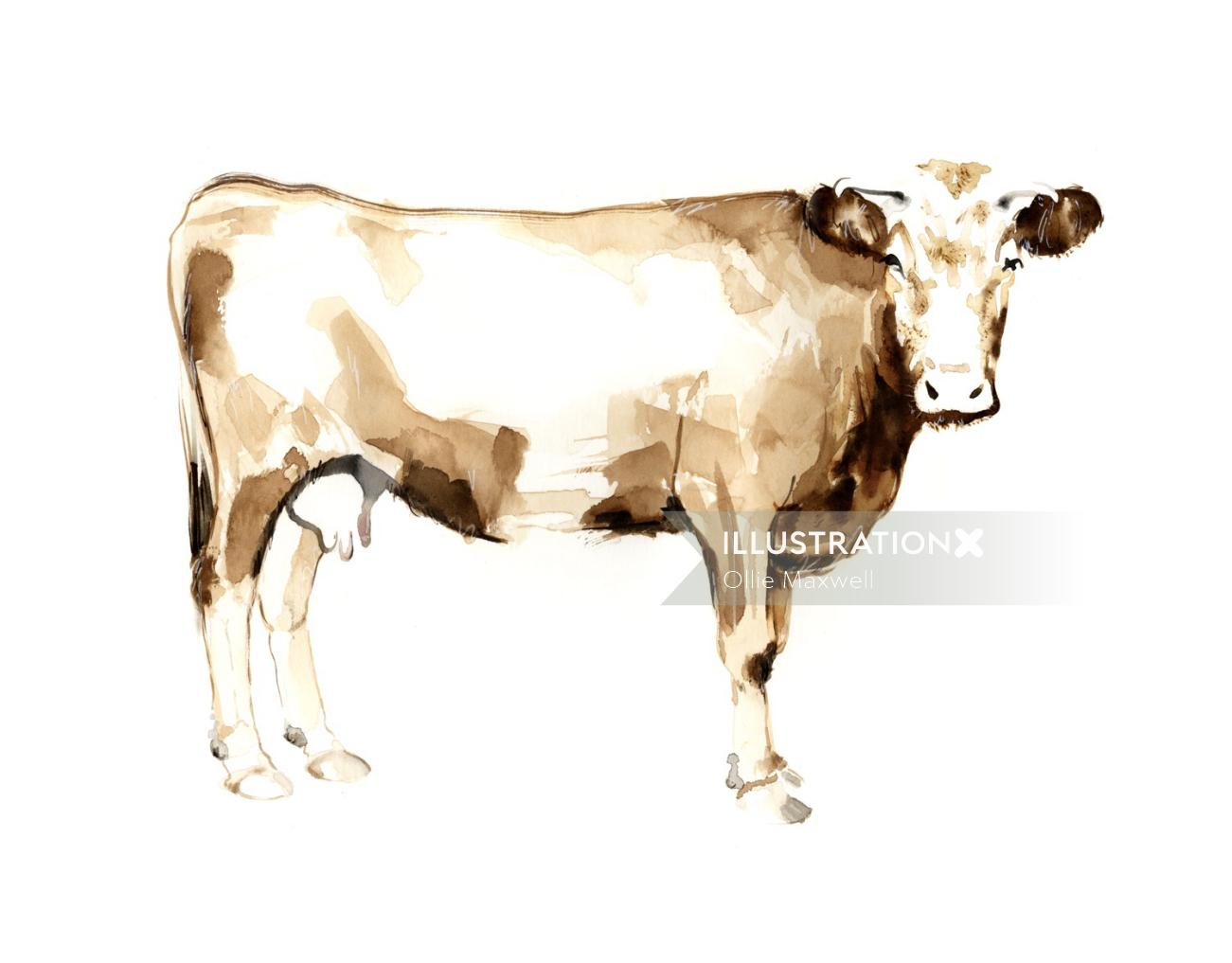 Animals graphic cattle