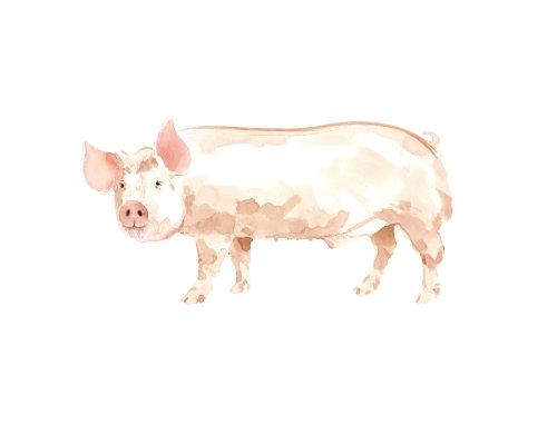 动物艺术猪
