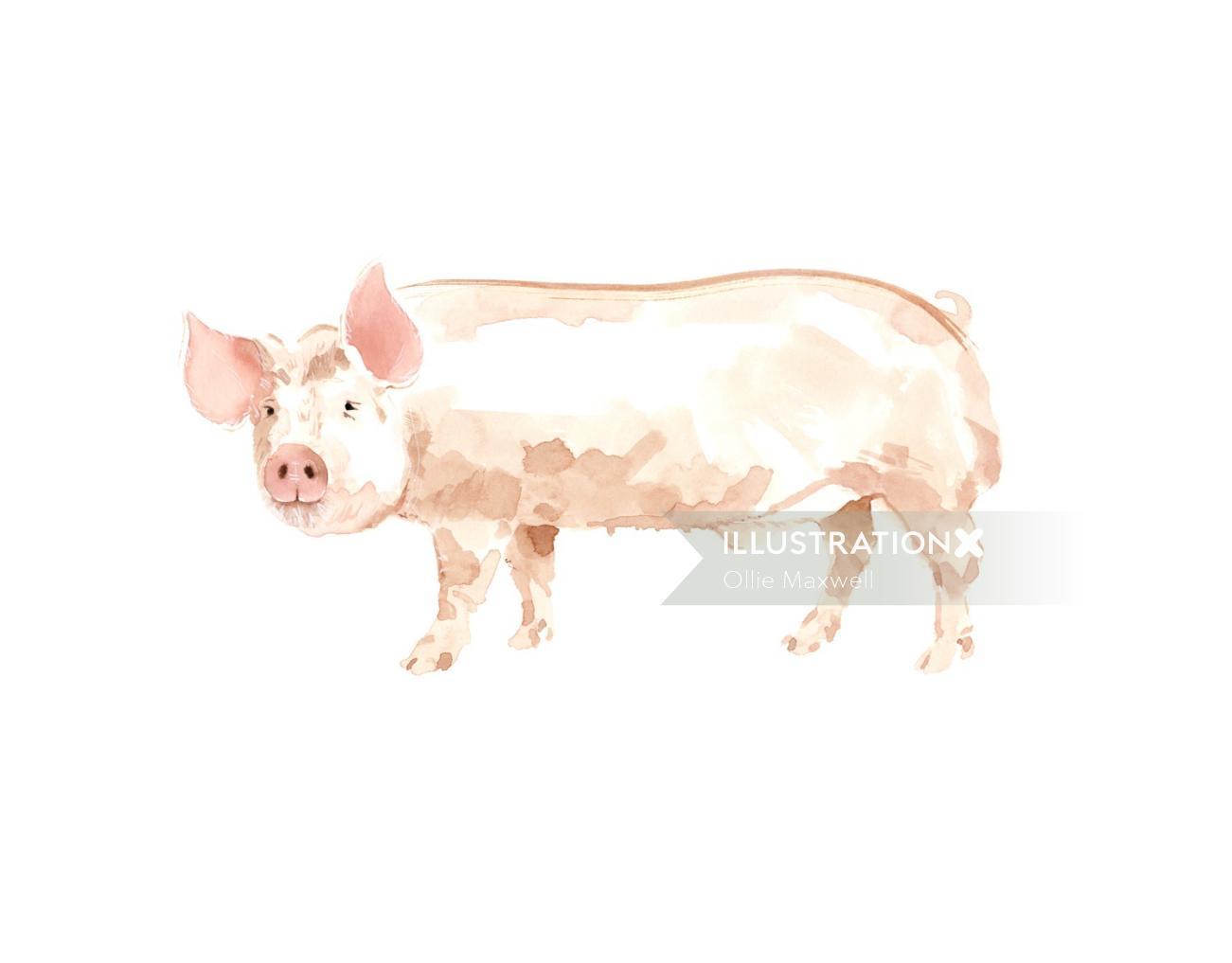 Animals art Pig