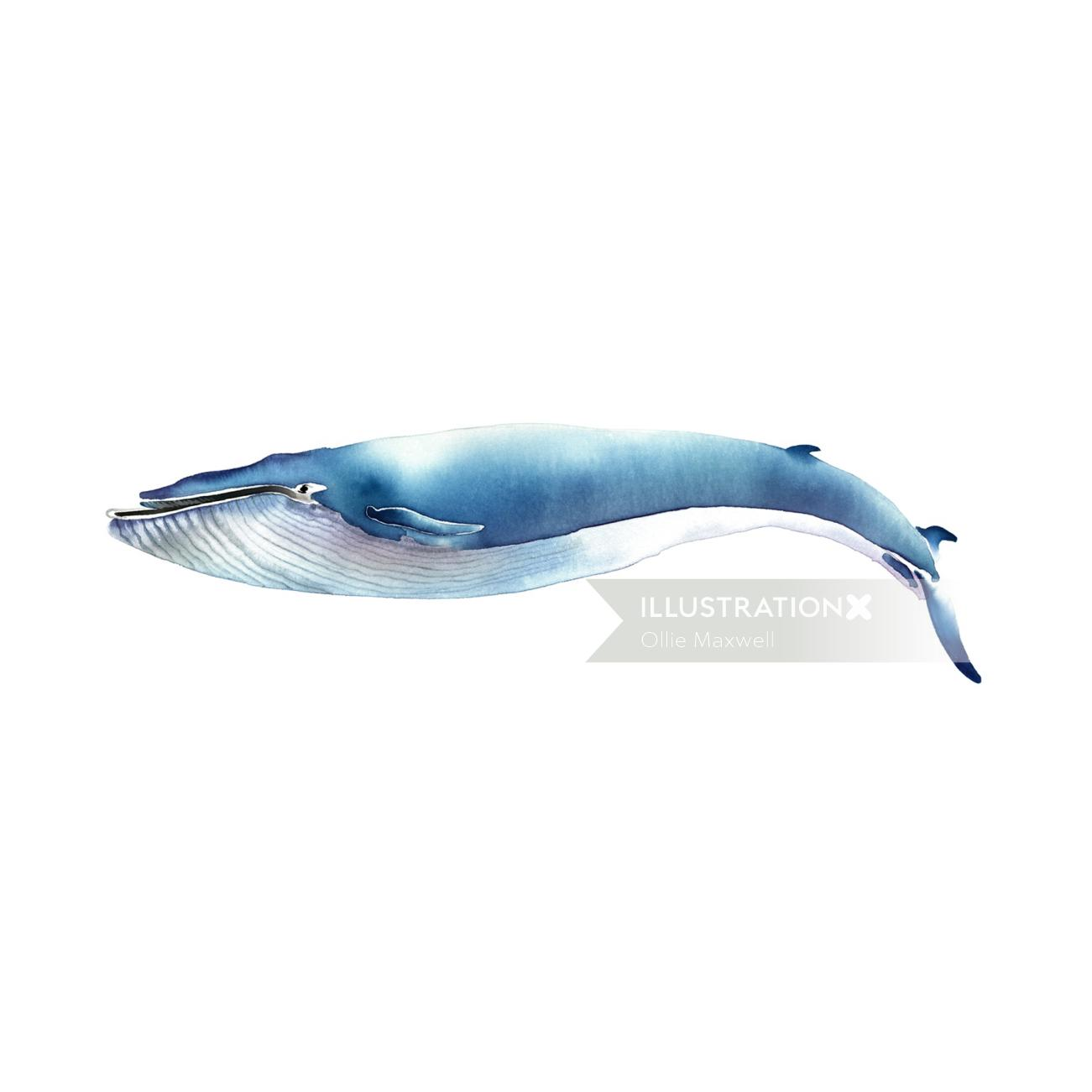 watercolour mammal whale