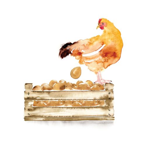Hen and Eggs illustration