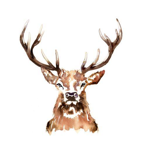 watercolour graphic stag