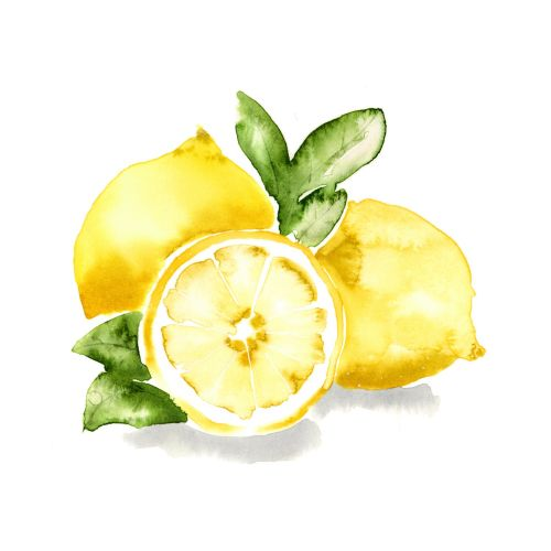 Watercolor painting of Meyer lemon