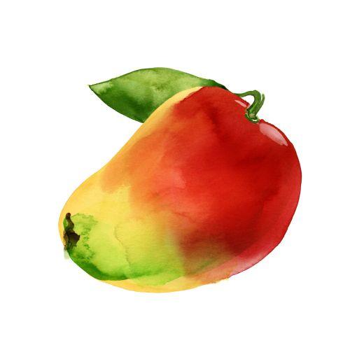 Watercolour of mango