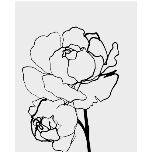 Black and White rose illustration