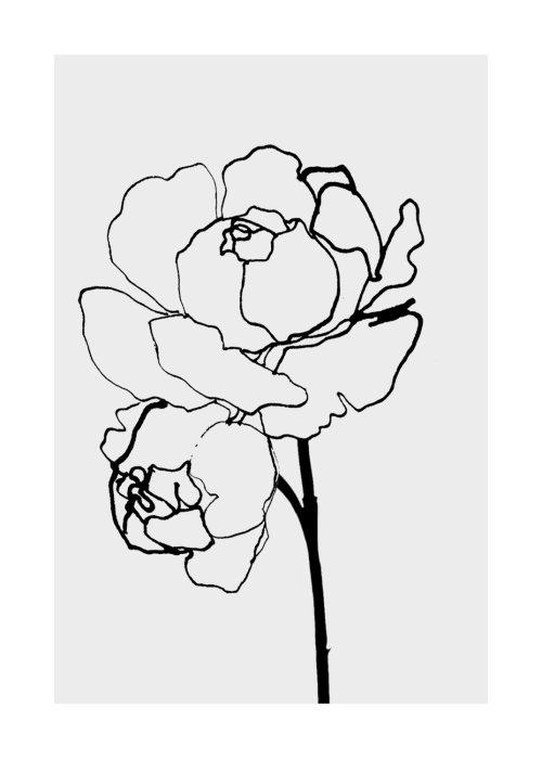Black and White rose illustration