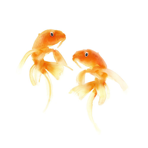 watercolour painting of Goldfish