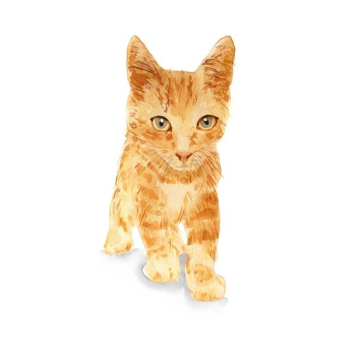 watercolour animal graphic kitten