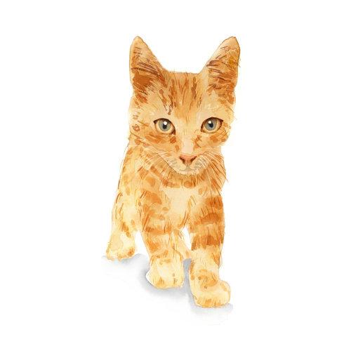 水彩动物图形小猫