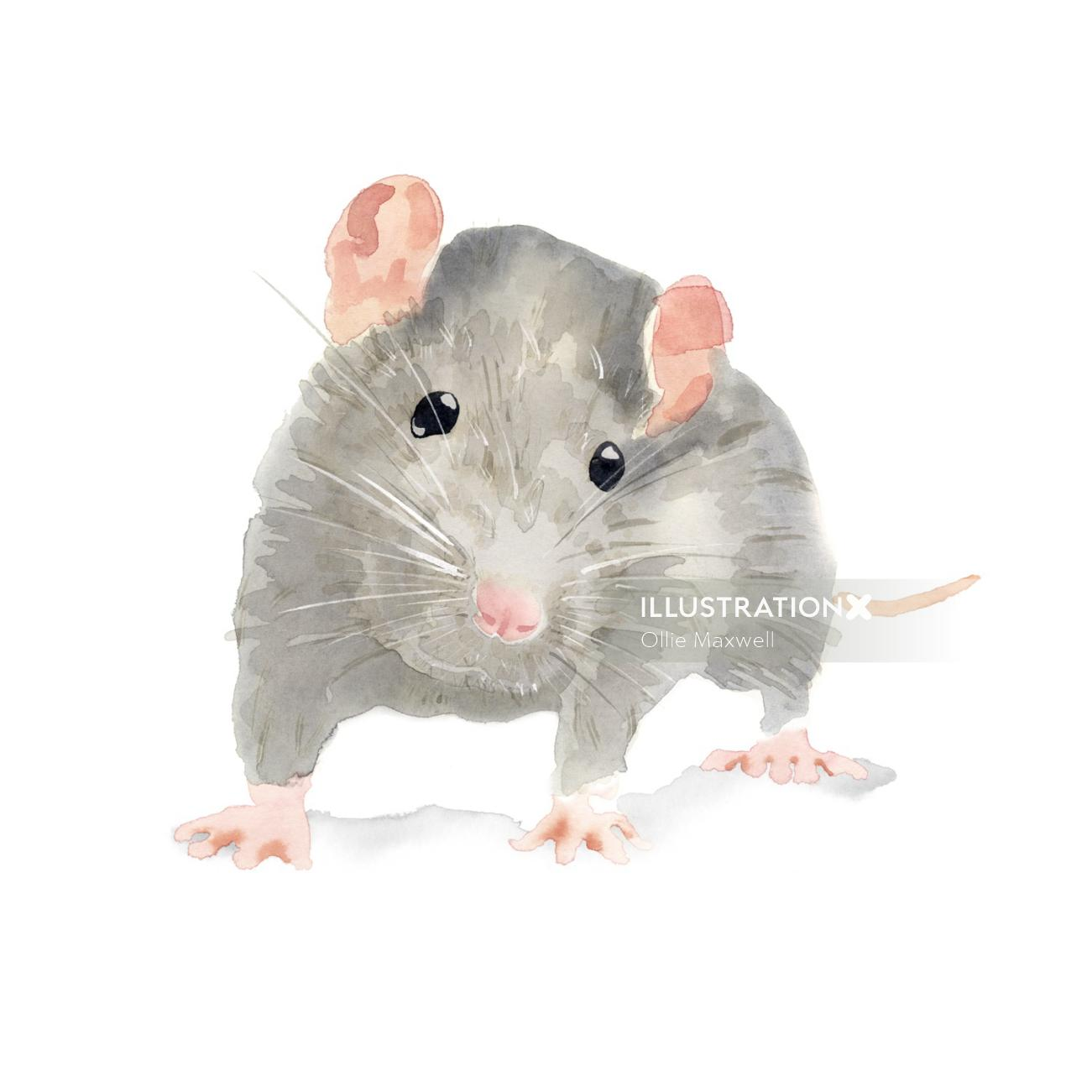Rat Illustration by Ollie Maxwell