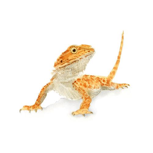 Illustration of Lizard