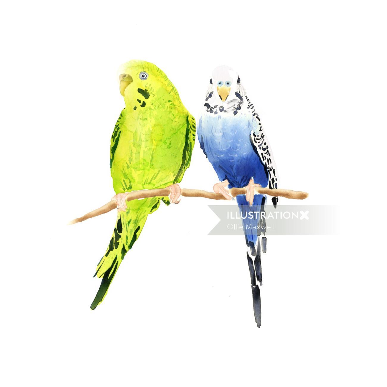 Illustration of couple parrots