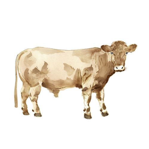 Watercolor painting of Cow