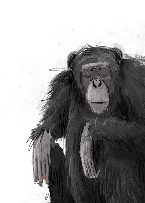 Chimpanzee black and white portrait