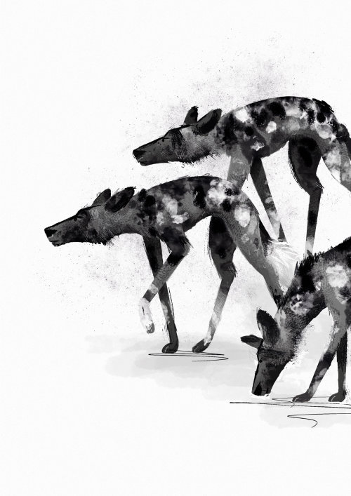 Black and white drawing of wolfs by Paperface