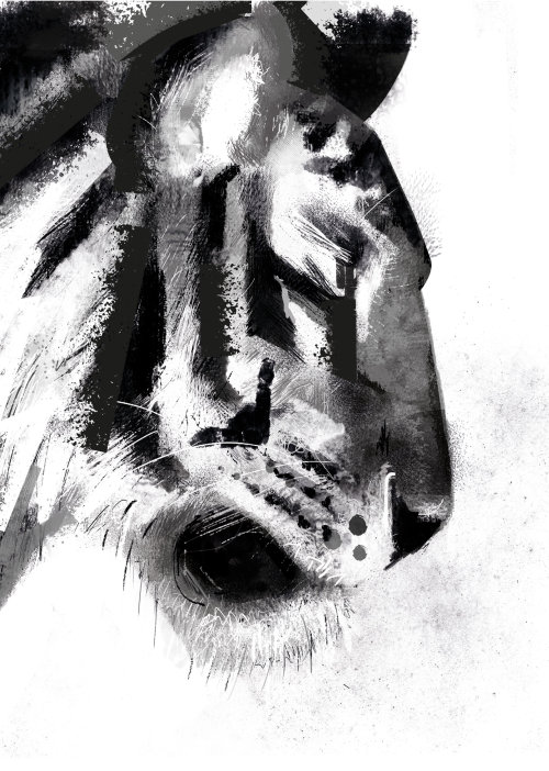 Black and white portrait of tiger