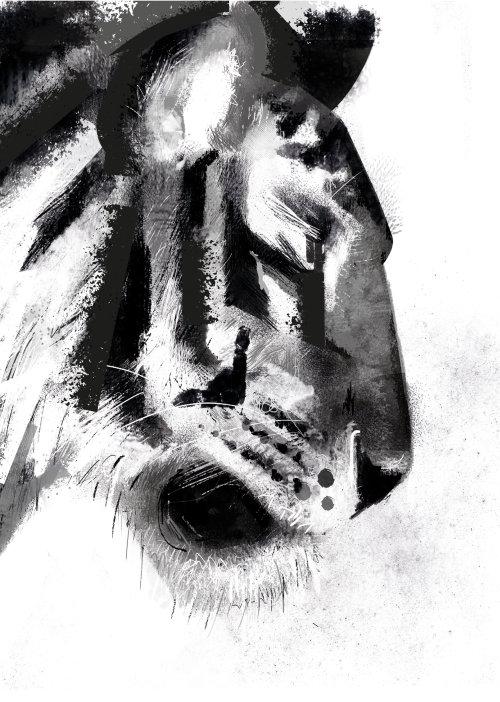 Portrait noir et blanc de tigre