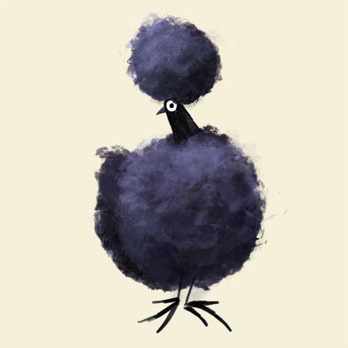 graphic black silkie chicken