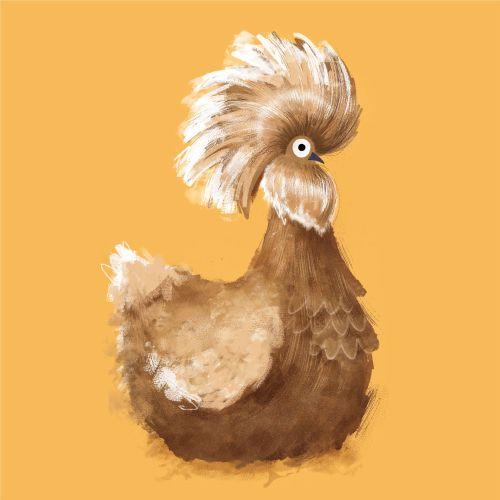 Animals Golden polish chicken