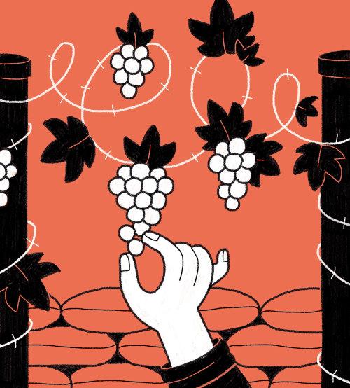 Vineyards Among the Battlefields