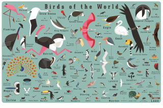 Wall art of Birds