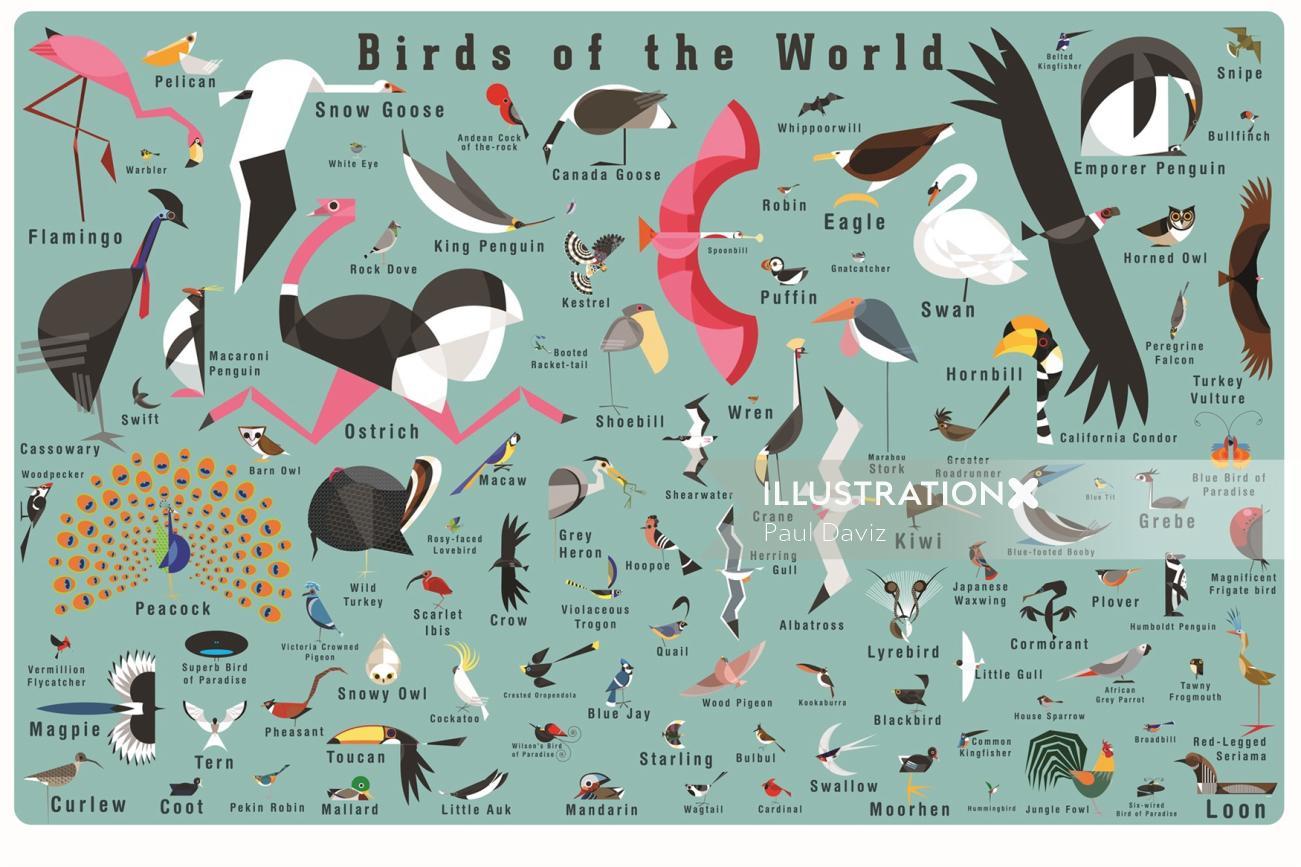 Wall art of Birds
