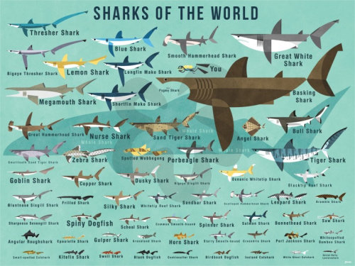 Sharks of the world Graphic decorative wall art