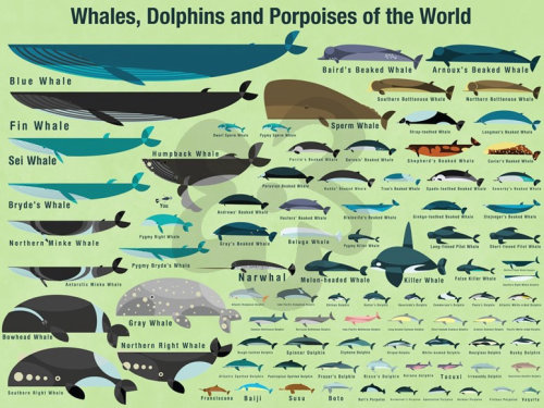 Wall art of Cetaceans