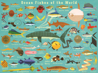 Fishes wall art by Paul Daviz