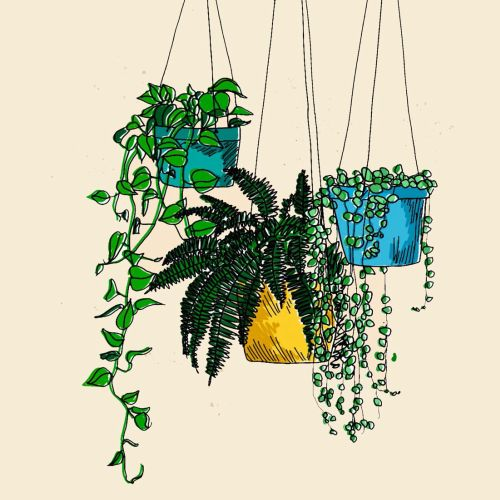 Hanging plant watercolor drawing